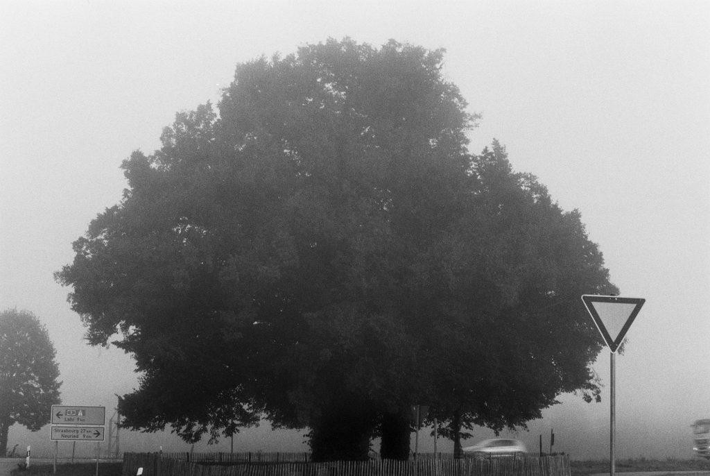 Linde im Nebel - digital nachbearbeitet Ilford FP4 Plus 125 ASA